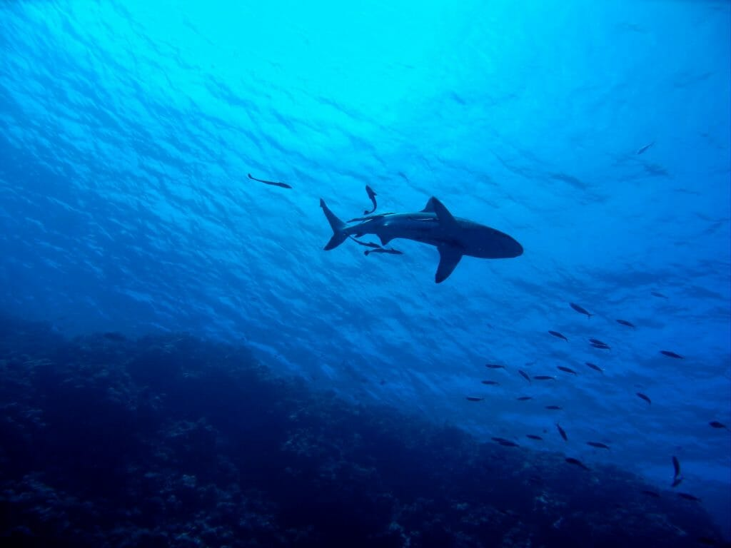 Great barrier reef australia shark