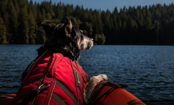 black dog with red life jacket sitting in front of kayak