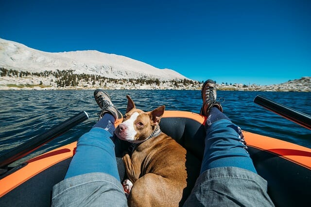 pitbull mutt on raft kayak in cold climate with mountains