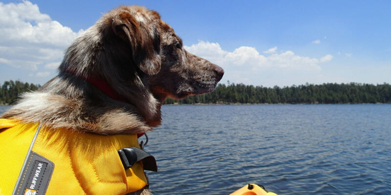 dog with life vest on yellow kayak
