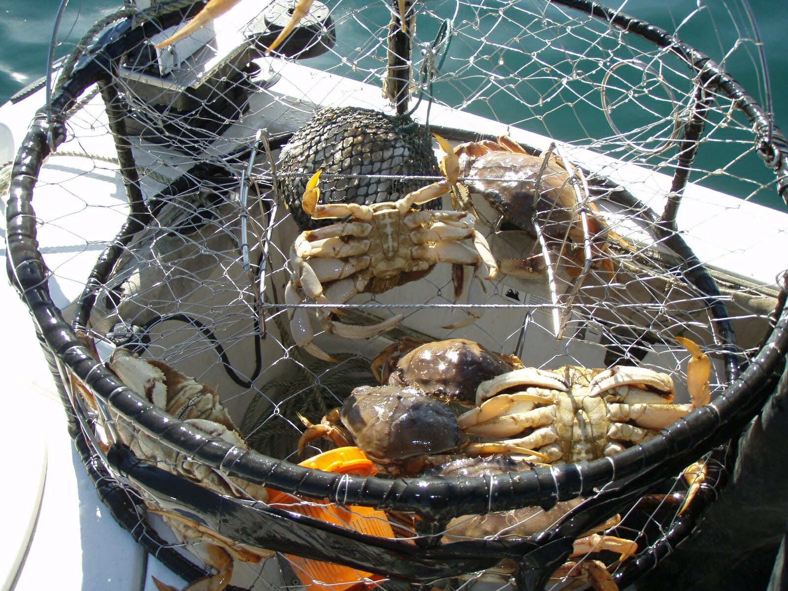 5 Best Crab Traps: Get More Crabs in Your Pot!   The ...