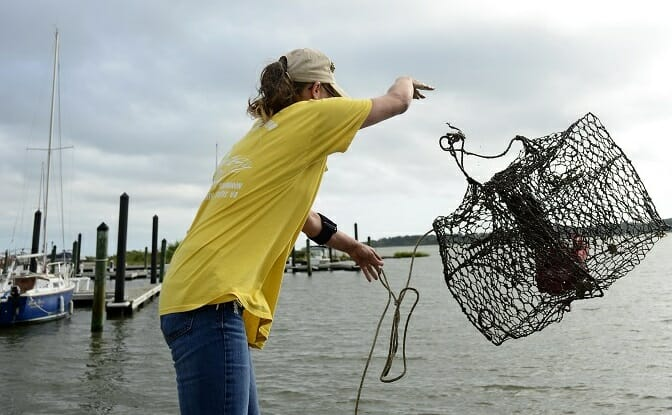 woman throwing crab trap into the water off of pier