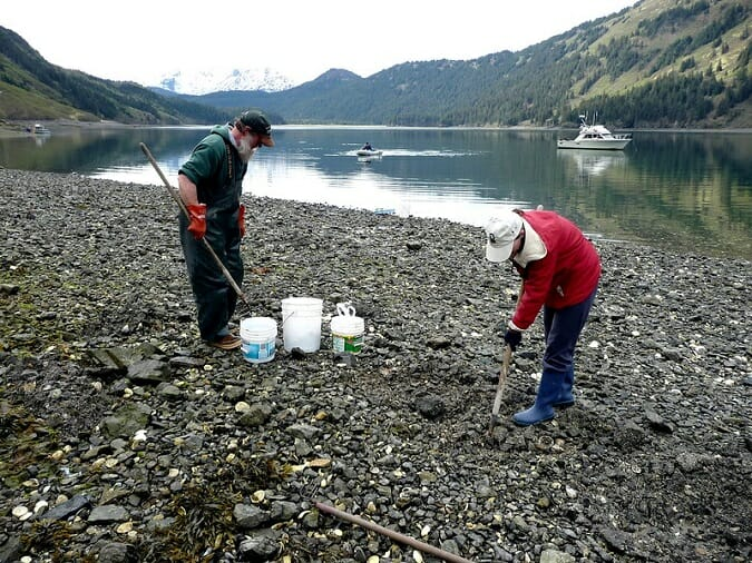 two people digging for clams alaska