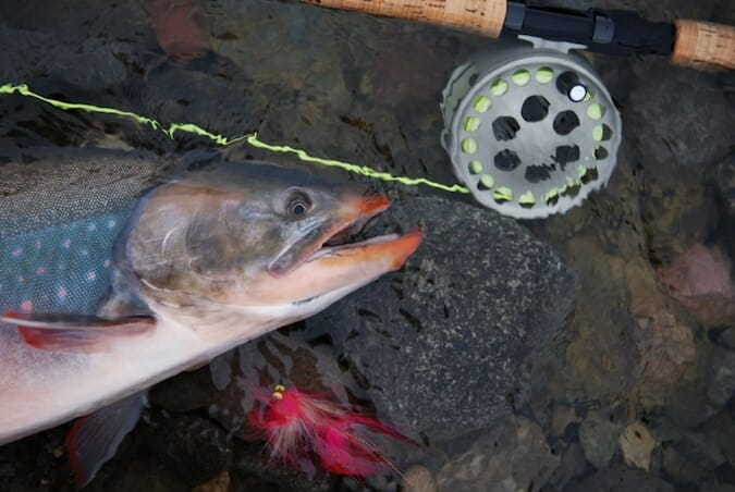 arctic char and fly rod reel